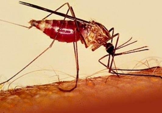 В Мексике одобрили вакцину против лихорадки денге