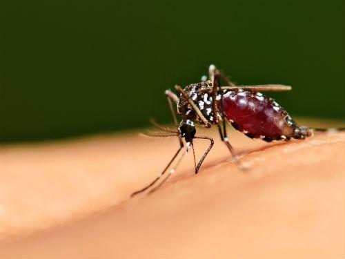 На острове Тайвань крупнейшая в истории вспышка тропической лихорадки денге