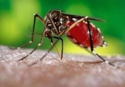 Ученые из США начнут разрабатывать вакцину против лихорадки Зика