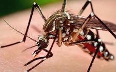 Специалисты МАГАТЭ предложили стерилизовать москитов, которые переносят вирус Зика