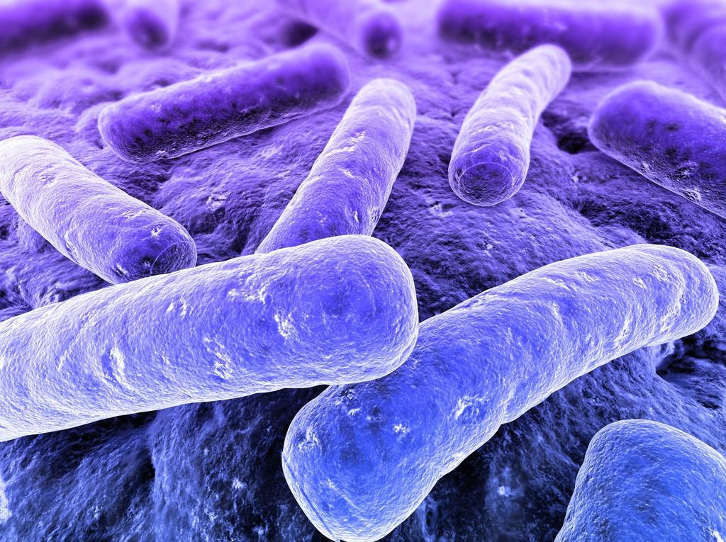 Ученые обнаружили способы обмена  информации между бактерии