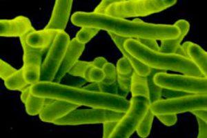 Народные средства помогут избавиться от туберкулеза