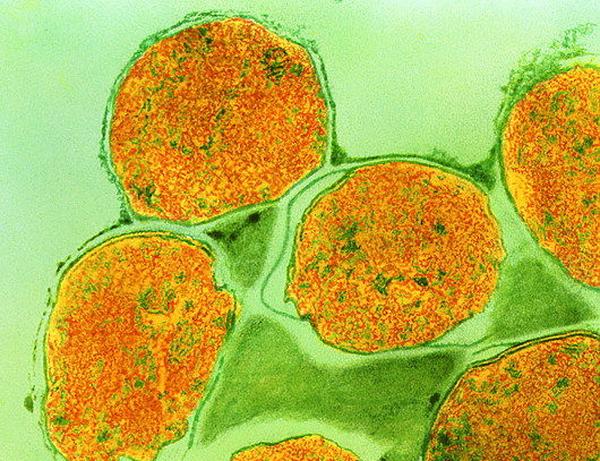 Ученые определили самый древний вирус