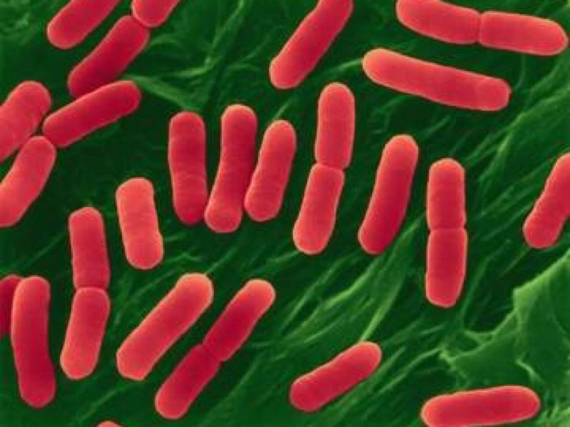 Ученые пытаются остановить новый смертельный вирус