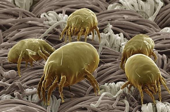 Домашняя пыль может вызвать развитие рака, астмы и аллергии