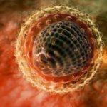 Профилактика гемоконтактных гепатитов