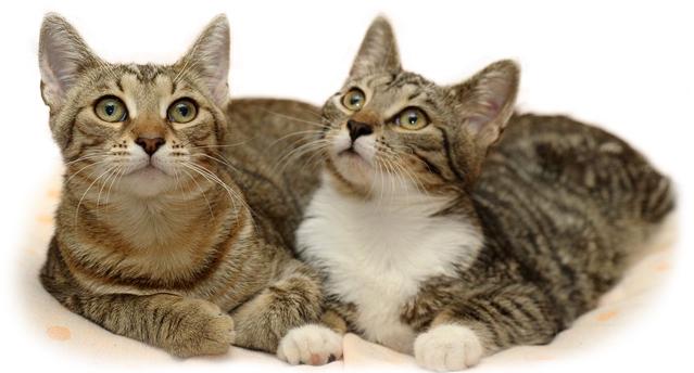 Частое мочеиспускание у кошек: грамотное лечение
