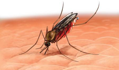 Колебания температуры в океане связаны с эпидемиями малярии