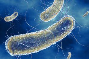 Биологи научились управлять бактериями, синхронизировав их с компьютером