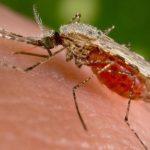 Ученые создали новое лекарство от малярии