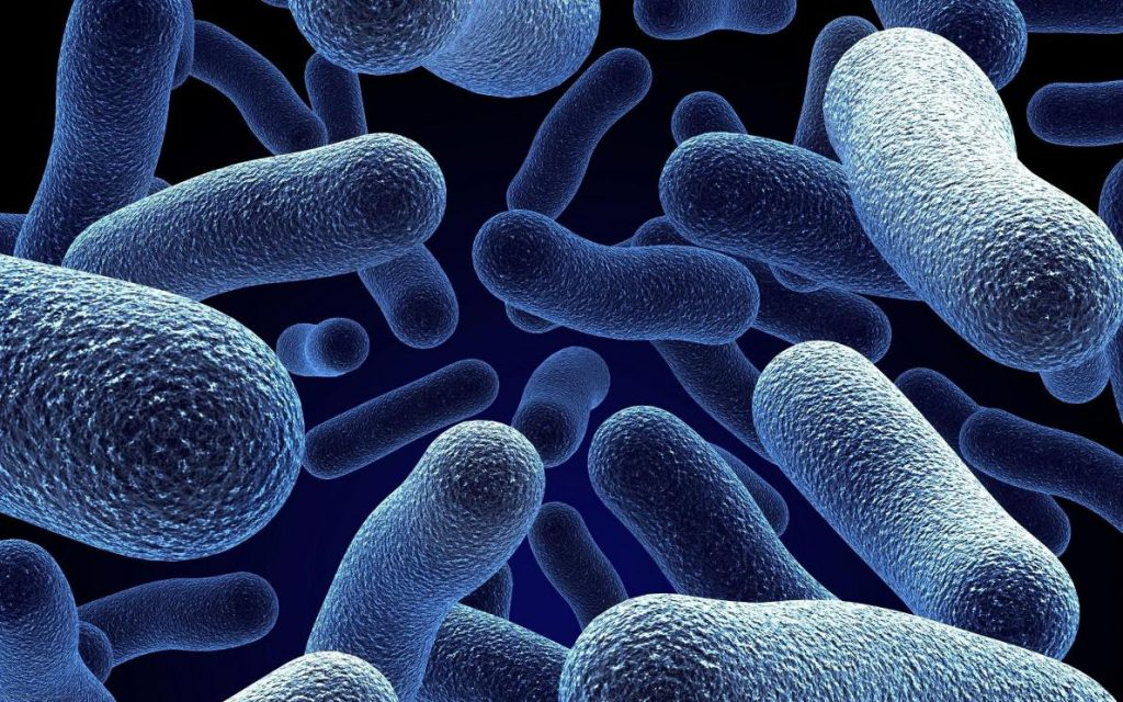 Бактерии способны перепрограммировать клетки