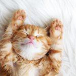 Кошки распространяют опасную инфекцию