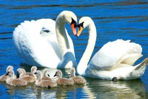 В Литве специалистами подтвержден первый случай птичьего гриппа