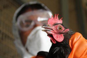 Птичий грипп в КНР: погибли еще четыре человека
