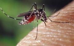 Роспотребнадзор приступил к борьбе с комарами