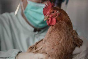 Птичий грипп нашли на донской птицефабрике