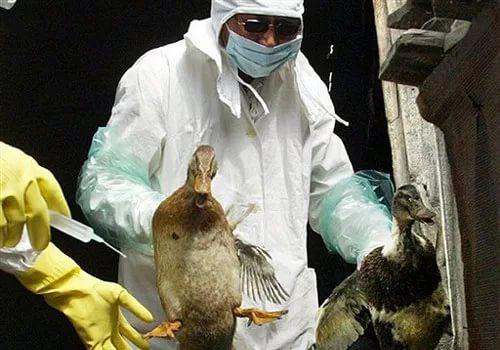 Россия временно ограничила ввоз птицы из трех районов Дании