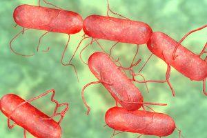 С помощью бактерий сальмонеллы будут бороться с раковыми клетками