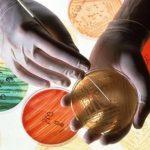 Генетически измененные бактериофаги будут бороться с инфекциями, устойчивыми к антибиотикам