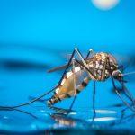 В Индии зафиксированы первые случаи инфицирования вирусом Зика