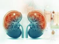Голодец: Более 90% услуг по диализу оказывают частные клиники РФ