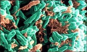Найден новый ген, ответственный за возникновение туберкулеза