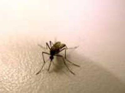В Сингапуре подтвердилось два новых случая заражения вирусом Зика