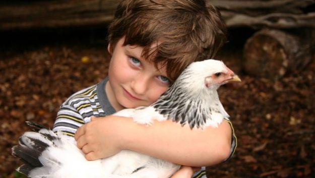 Заразиться сальмонеллезом вполне можно и от живых курочек
