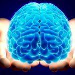 Ученые обнаружили два способа проникновения опасного грибка в мозг