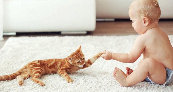 Кошки могут лечить от астмы