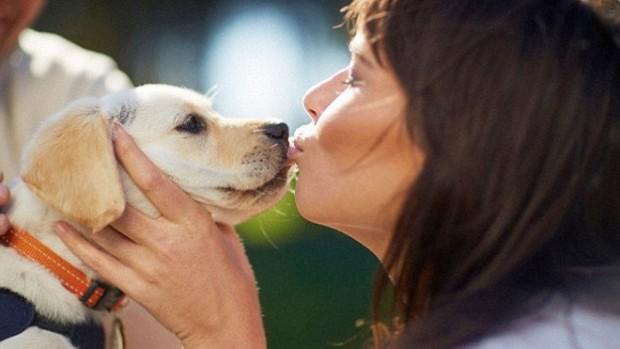 Домашние животные могут заразить своих хозяев инфекцией