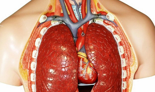 Новый подход в лечении легочной болезни
