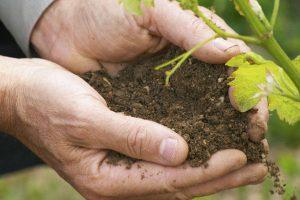 Новый антибиотик, сражающий опасные бактерии наповал, найден в грязи