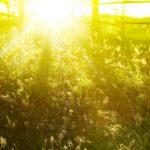 Хорошая погода выгнала простуду из Костромской области