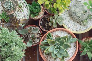 Комнатные цветы: от кактусов до орхидей
