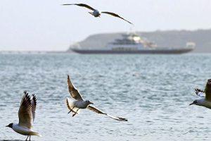 «Пернатые мигранты» угрожают Крыму птичьим гриппом