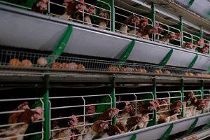 Эксперты объяснили вспышки птичьего гриппа в России