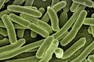 Как бактерии получают устойчивость к антибиотикам
