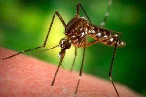 Медики поняли, как защититься от опасных инфекций, переносимых насекомыми