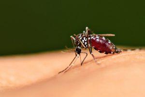 Россияне боятся заразиться ВИЧ через комаров и посуду