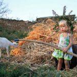 Микробы в деревенской пыли защищают от развития астмы – исследование