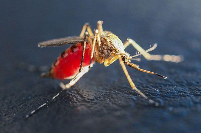Можно ли заразиться ВИЧ через укус комара?