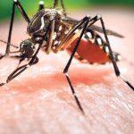 Комары, клещи, блохи: летние насекомые, которые могут заразить опасной болезнью
