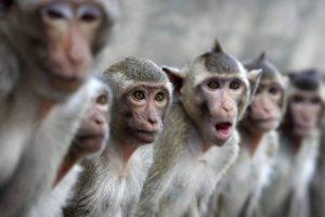 Вирус жёлтой лихорадки передался людям через обезьян и комаров