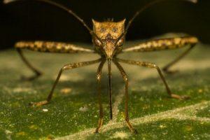 Какие болезни переносят комары