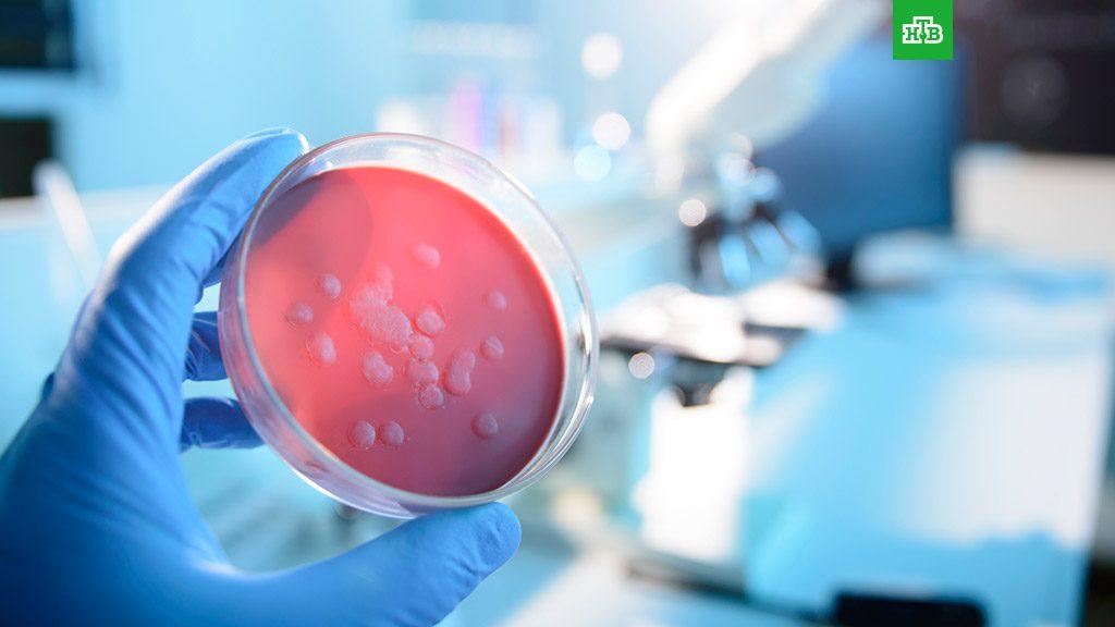 Ученые заявили о «гриппе», способном убить 80 млн человек