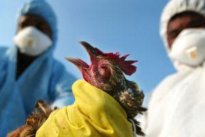 Китайские врачи рассказали, грозит ли России «птичий грипп»