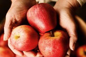 5 причин, почему есть яблоки полезно каждый день