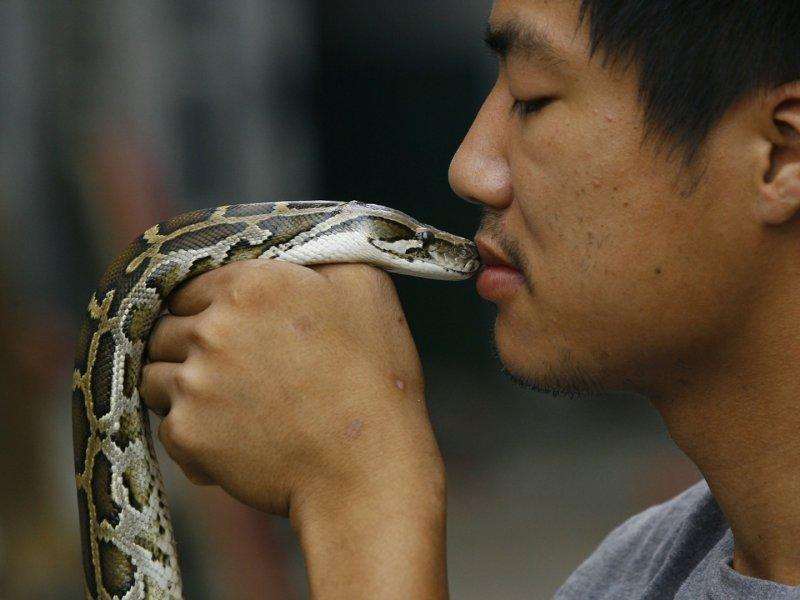 Китайскими учеными определен источник коронавируса — змеи и летучие мыши