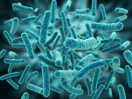 Ученые расшифровали геном 3000 опасных бактерий